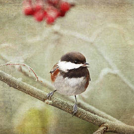 Chestnut Backed Chickadee in Winter by Peggy Collins