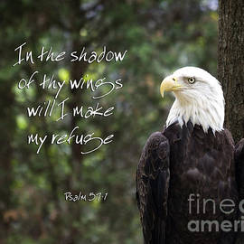 Eagle Scripture by Jill Lang