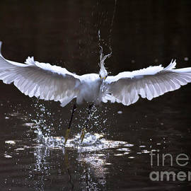 Ursula Lawrence - Egret in Flight