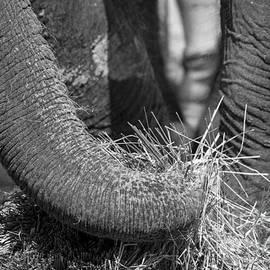 Steven Ralser - Elephant