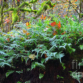 Fall Fern  by Tina Marie