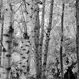 Guido Montanes Castillo - Forest
