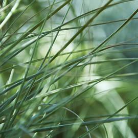 Sabina  Horvat - Grass Abstract