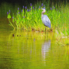 Great Blue Heron With Marsh Flowers by Bob Coates