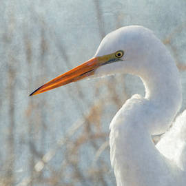 Angie Vogel - Great Egret