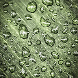 Green leaf with raindrops by Elena Elisseeva