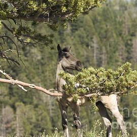 Wildlife Fine Art - Hiding Horse