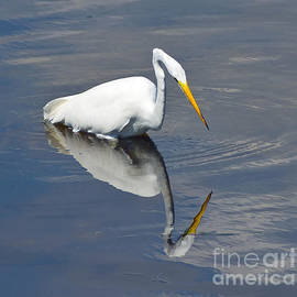 Hunting Egret by Stephen Whalen