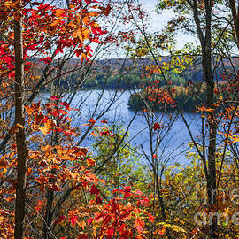 Lake and fall forest by Elena Elisseeva