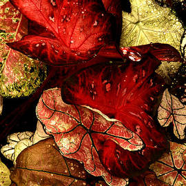 Caladium Leaves Close-up by Paul W Faust -  Impressions of Light