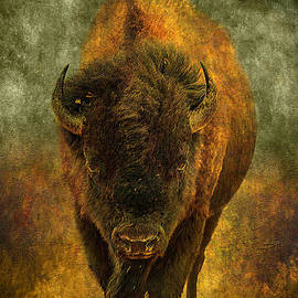 Lone Buffalo by Cindy Singleton