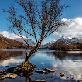 Adrian Evans - Lone Tree