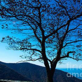 Kathy Liebrum Bailey - Lookout Tree