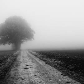 Lost in the Fog by Miguel Winterpacht