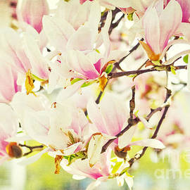 Magnolia by Angela Doelling AD DESIGN Photo and PhotoArt