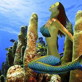 Masked Mermaid by Paula Porterfield-Izzo