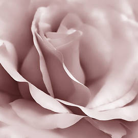 Jennie Marie Schell - Mauve Ballerina Rose Flower
