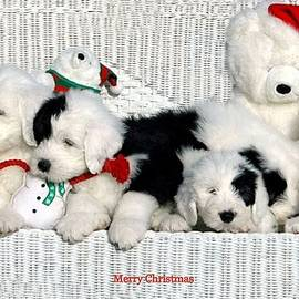Merry Christmas Puppies by Kathleen Struckle