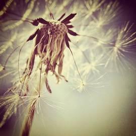 #mgmarts #dandelion #makeawish #wish