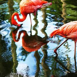 Chuck  Hicks - Mirror Mirror