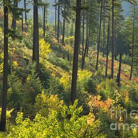 Idaho Scenic Images Linda Lantzy - Morning Light