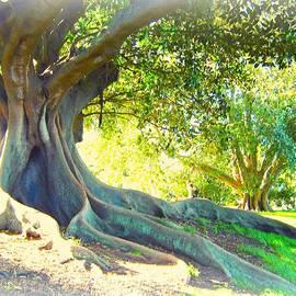 Morton Bay Fig Tree by Leanne Seymour