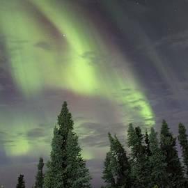 David Broome - Northern Night