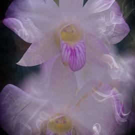 Kathleen Struckle - Orchid Ruffles