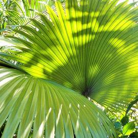 Kay Gilley - Palm Fronds