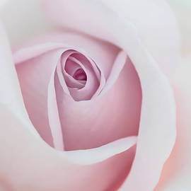 Jennie Marie Schell - Pastel Pink Rose Flower