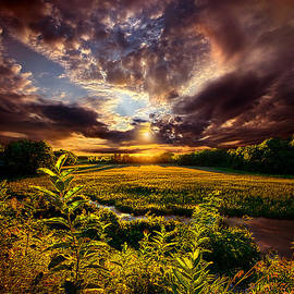 Phil Koch - Perspective