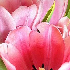 Regina Geoghan - Pink Tulip Trio