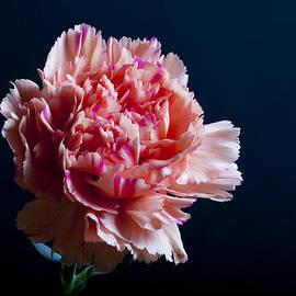 Pinky by Doug Norkum