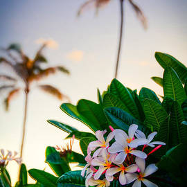 Plumerias and Palms by Kelly Wade