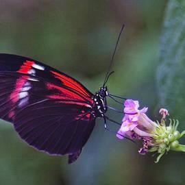 Maj Seda - Reaching for Nectar