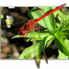 Mariarosa Rockefeller - Red Dragonfly