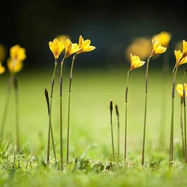 Roadside Flowers by Alan Roberts