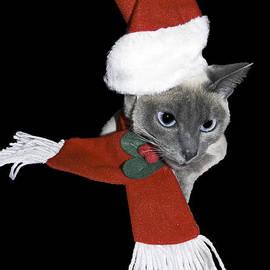 Santa Cat by Sally Weigand