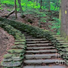 Stairway In The Woods by Kathleen Struckle