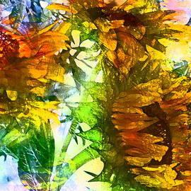 Sunflower 20 by Pamela Cooper