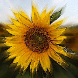 Sunflower by Cliff Norton