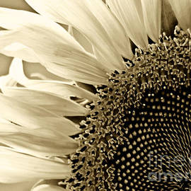 Sunny Bloom Sunflower by Carol F Austin