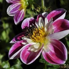Cathy Mahnke - Sweet Nectar