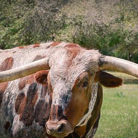 Texas Longhorn by Allen Biedrzycki