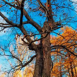 Jenny Rainbow - Texture of the Bark. Old Oak Tree