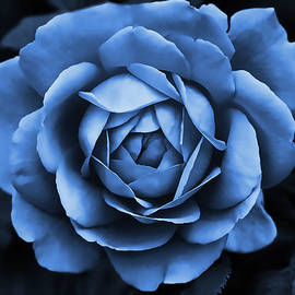 The Blue Rose by Jennie Marie Schell