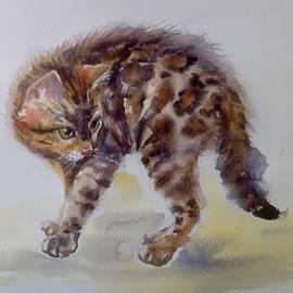 The cat by Katerina Kovatcheva