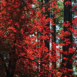 The Red Tree  by Saija  Lehtonen