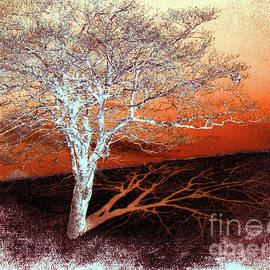 Tree in Snow in the Blue Ridge II by Dan Carmichael