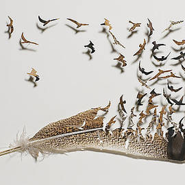 Where Feathers Come From by Chris Maynard